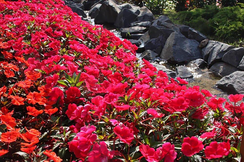 Festiwal Kwiatów w Parku Miniatur Minieuroland