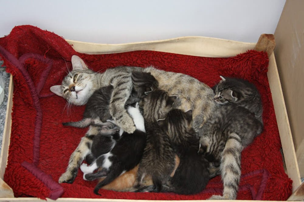 Szczęśliwa mama i jej wesołe kocięta