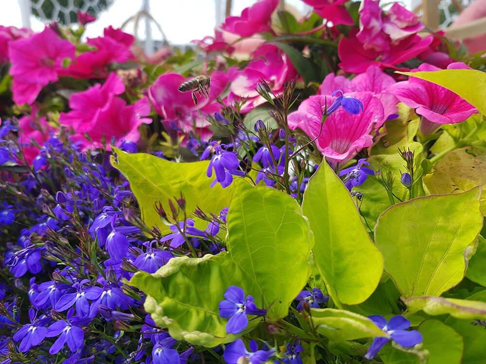 arboretum kłodzko festiwal kwiatów minieuroland