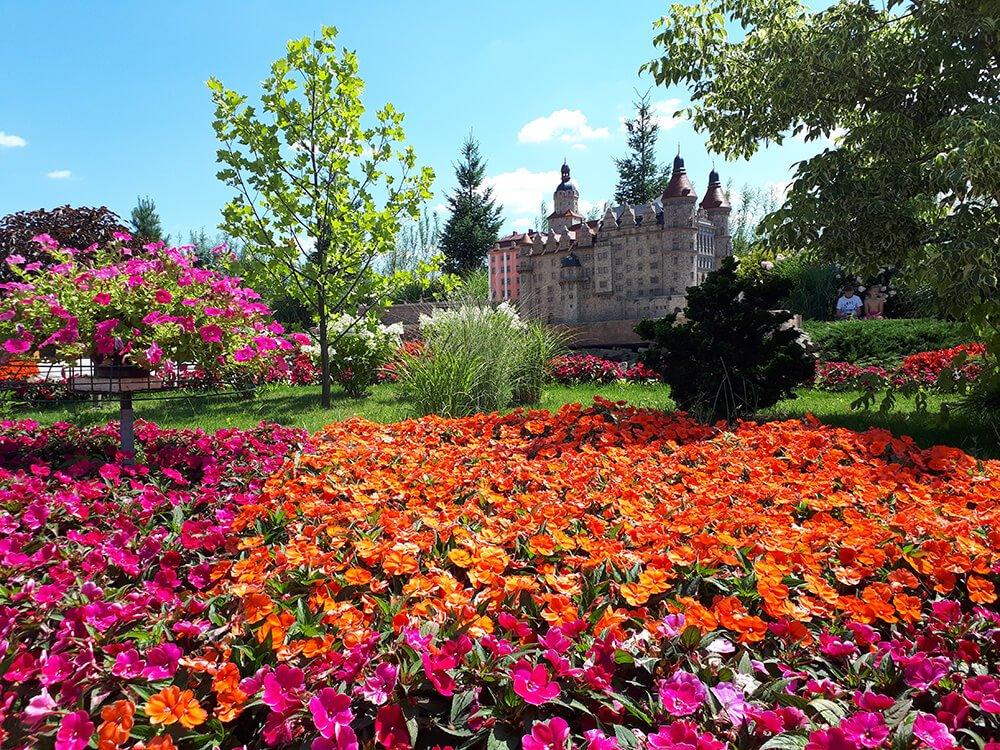 festiwal kwiatow