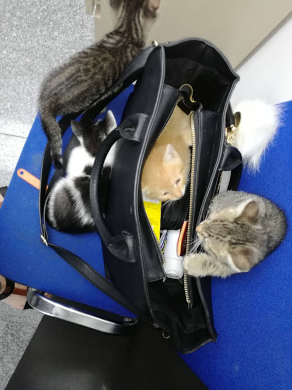 koty w torebce