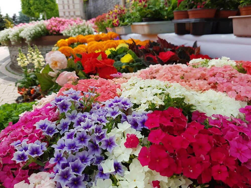 festiwal kwiatów minieuroland